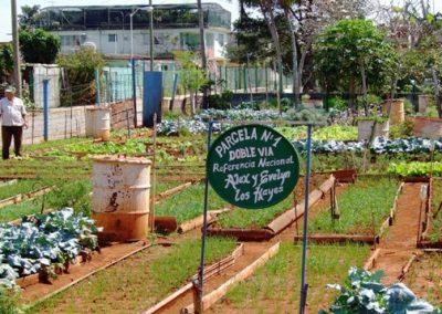 Agriculture urbaine dans une banlieue de La Havane