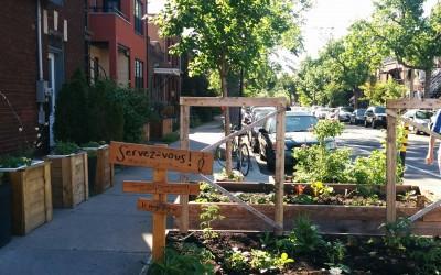 L'agriculture urbaine à Montréal : vers un nouveau paradigme de production alimentaire?