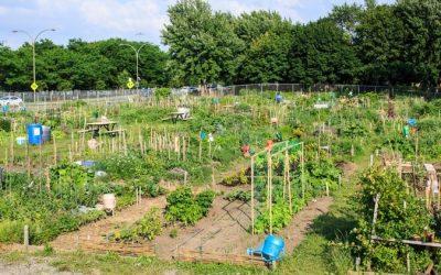 Capsule thématique – L'agriculture urbaine pour favoriser la résilience alimentaire dans les villes canadiennes