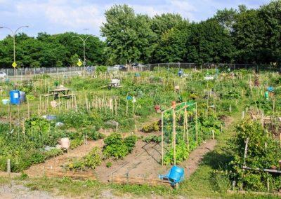 Jardin communautaire à Montréal