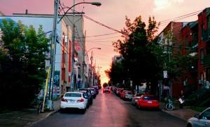 Montreal_Rose