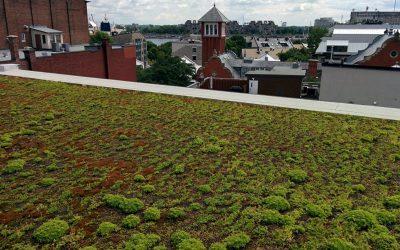 Raconte-moi un terrain – Interview avec Caroline Gagnon – Un toit vert: un lieu à fréquenter, ou du moins, un espace à contempler